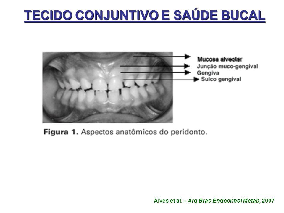 TECIDO CONJUNTIVO E SAÚDE BUCAL Alves et al. - Arq Bras Endocrinol Metab, 2007