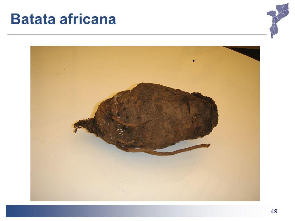 49 Batata africana