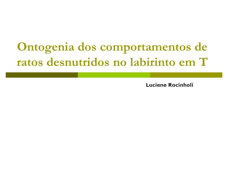 Ontogenia dos comportamentos de ratos desnutridos no labirinto em T Luciene Rocinholi