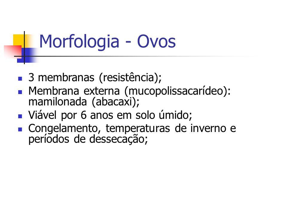Morfologia - Ovos 3 membranas (resistência); Membrana externa (mucopolissacarídeo): mamilonada (abacaxi); Viável por 6 anos em solo úmido; Congelament