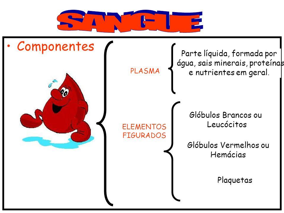 Componentes PLASMA ELEMENTOS FIGURADOS Glóbulos Brancos ou Leucócitos Glóbulos Vermelhos ou Hemácias Plaquetas Parte líquida, formada por água, sais minerais, proteínas e nutrientes em geral.
