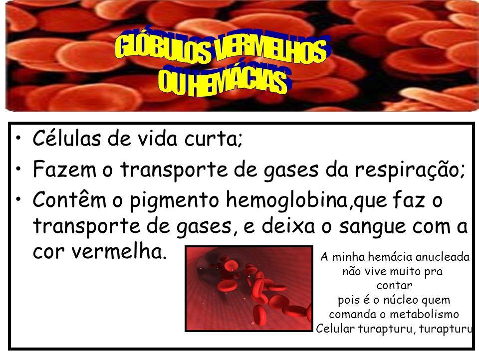 Células de vida curta; Fazem o transporte de gases da respiração; Contêm o pigmento hemoglobina,que faz o transporte de gases, e deixa o sangue com a cor vermelha.