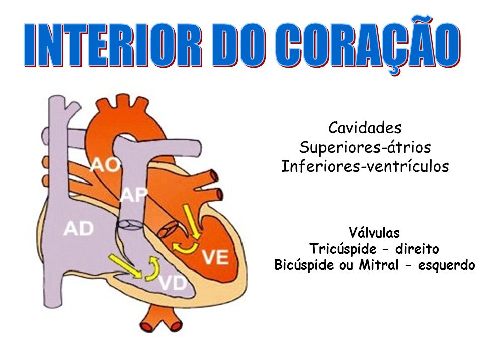Cavidades Superiores-átrios Inferiores-ventrículos Válvulas Tricúspide - direito Bicúspide ou Mitral - esquerdo
