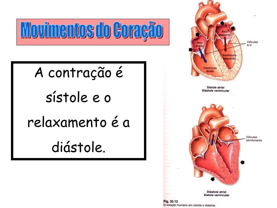 Pequena Coração – Pulmões – Coração Grande Coração – Corpo - Coração