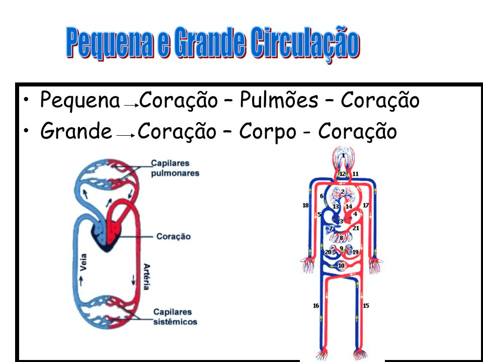 ARTERIOSCLEROSE Deposição de material gorduroso na parede das artérias, resultando em estreitamento e eventual diminuição do fluxo sangüíneo.
