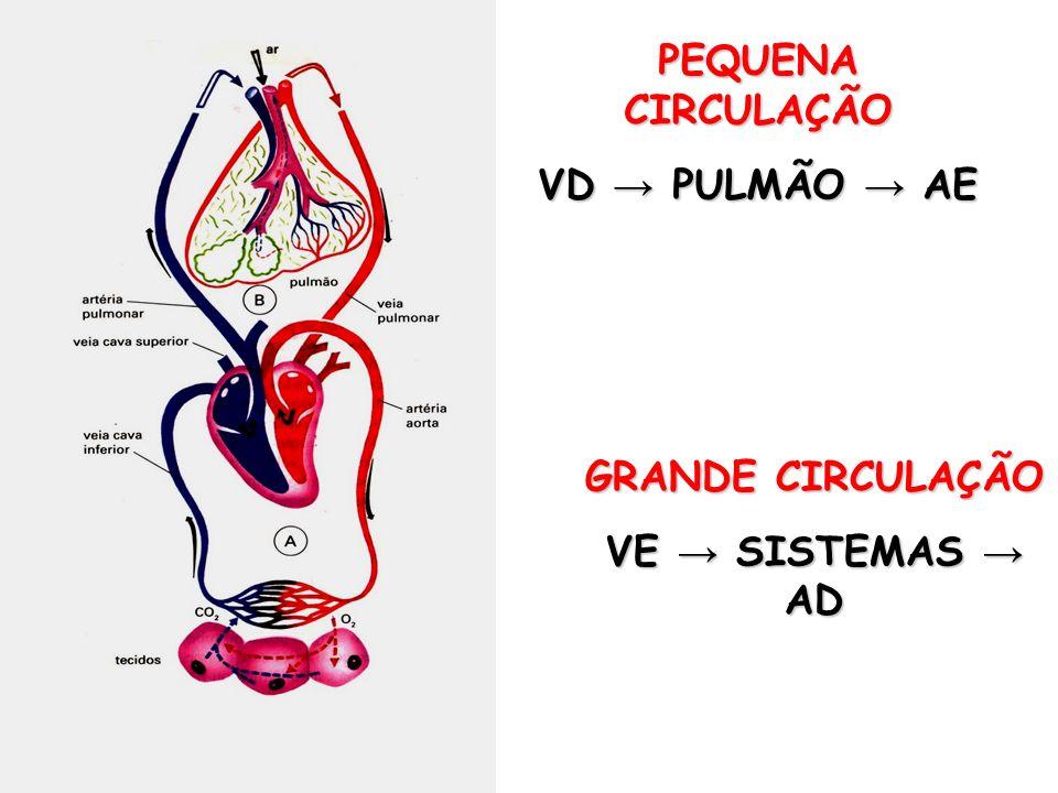 MÚSICA EDUCATIVA CIRCULAÇÃO Tá na hora, tá na hora Desse sangue circular Do ventrículo direito Prá artéria pulmonar.