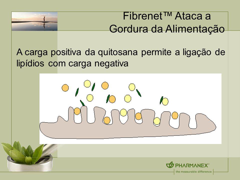 Fibrenet Ataca a Gordura da Alimentação A carga positiva da quitosana permite a ligação de lipídios com carga negativa