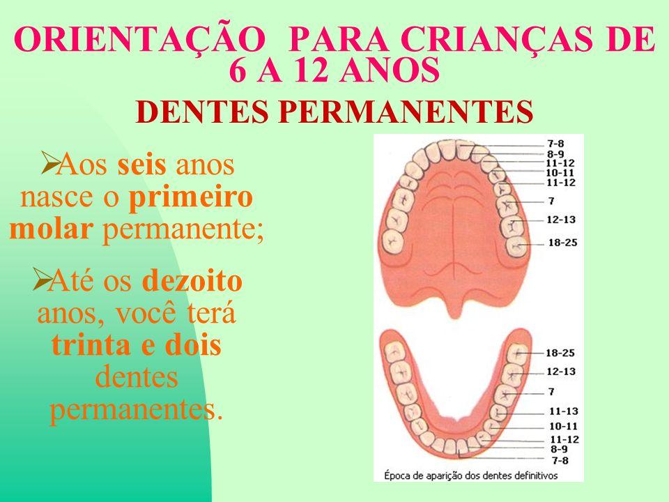 ORIENTAÇÃO PARA CRIANÇAS DE 6 A 12 ANOS DENTES PERMANENTES Aos seis anos nasce o primeiro molar permanente; Até os dezoito anos, você terá trinta e dois dentes permanentes.