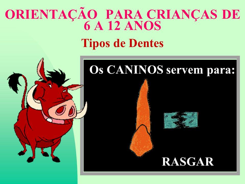 ORIENTAÇÃO PARA CRIANÇAS DE 6 A 12 ANOS Tipos de Dentes Os CANINOS servem para: RASGAR