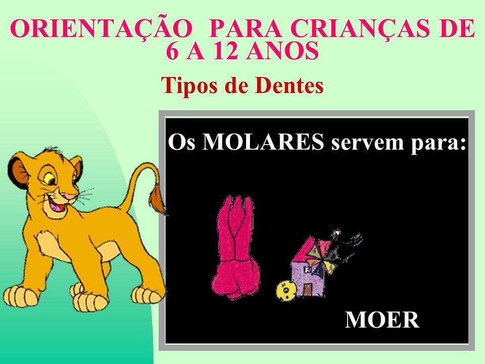 ORIENTAÇÃO PARA CRIANÇAS DE 6 A 12 ANOS Tipos de Dentes Os MOLARES servem para: MOER