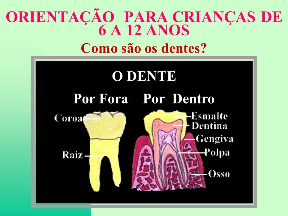 ORIENTAÇÃO PARA CRIANÇAS DE 6 A 12 ANOS Como são os dentes? O DENTE Por Fora Por Dentro