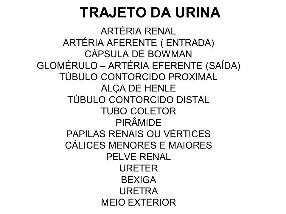 TRAJETO DA URINA ARTÉRIA RENAL ARTÉRIA AFERENTE ( ENTRADA) CÁPSULA DE BOWMAN GLOMÉRULO – ARTÉRIA EFERENTE (SAÍDA) TÚBULO CONTORCIDO PROXIMAL ALÇA DE H