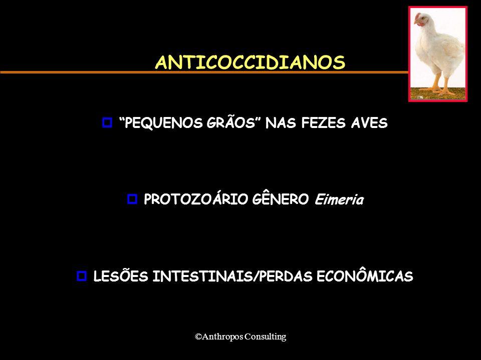 ©Anthropos Consulting ANTICOCCIDIANOS pPEQUENOS GRÃOS NAS FEZES AVES pPROTOZOÁRIO GÊNERO Eimeria pLESÕES INTESTINAIS/PERDAS ECONÔMICAS