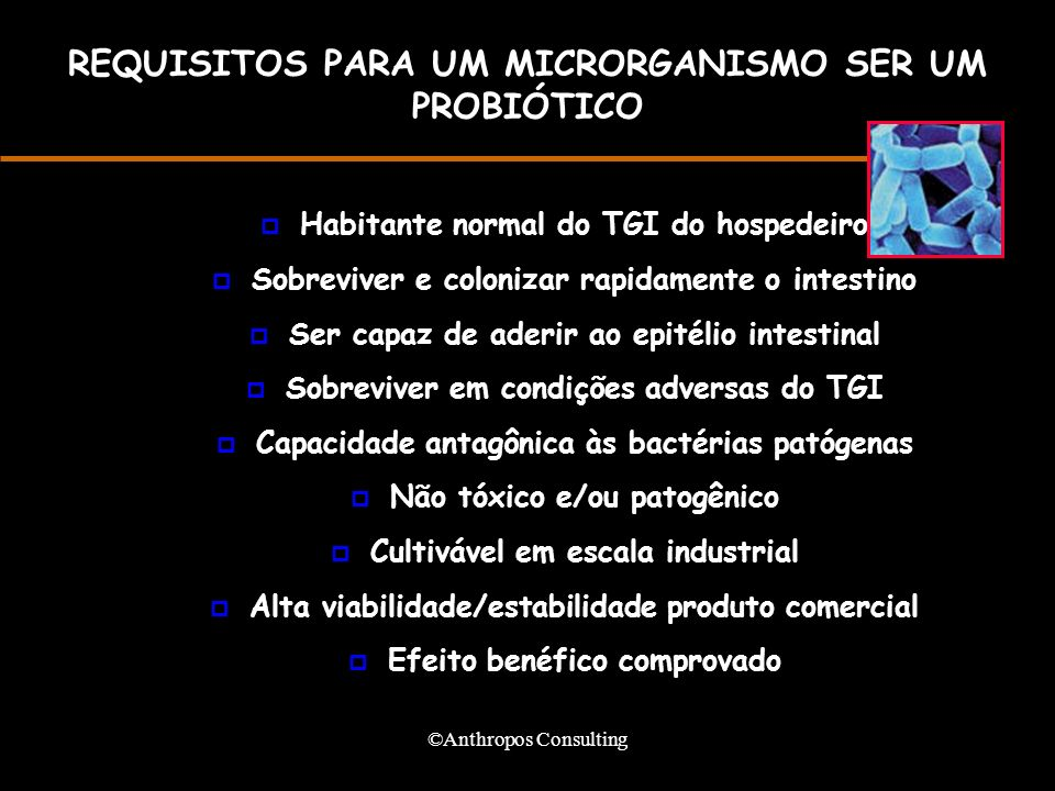 ©Anthropos Consulting REQUISITOS PARA UM MICRORGANISMO SER UM PROBIÓTICO p Habitante normal do TGI do hospedeiro p Sobreviver e colonizar rapidamente