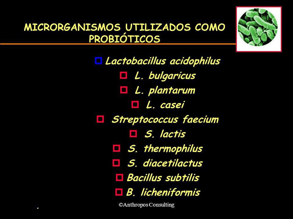 ©Anthropos Consulting MICRORGANISMOS UTILIZADOS COMO PROBIÓTICOS pLactobacillus acidophilus p L. bulgaricus p L. plantarum p L. casei p Streptococcus