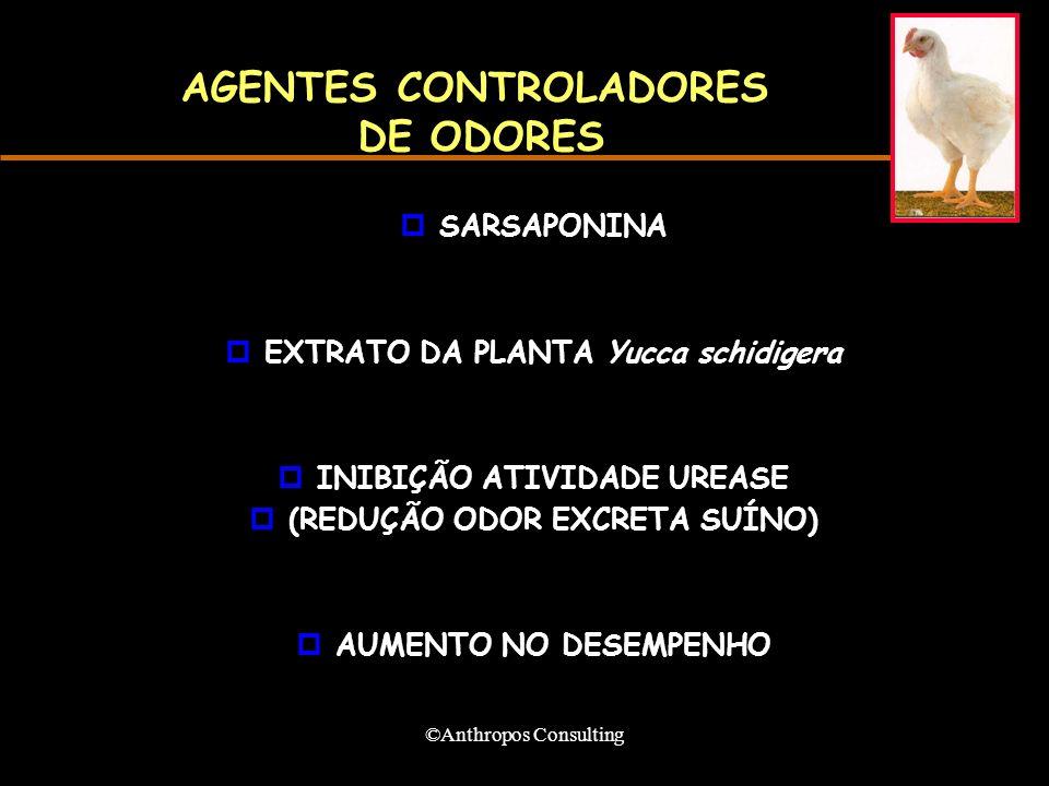 ©Anthropos Consulting AGENTES CONTROLADORES DE ODORES pSARSAPONINA pEXTRATO DA PLANTA Yucca schidigera pINIBIÇÃO ATIVIDADE UREASE p(REDUÇÃO ODOR EXCRETA SUÍNO) pAUMENTO NO DESEMPENHO