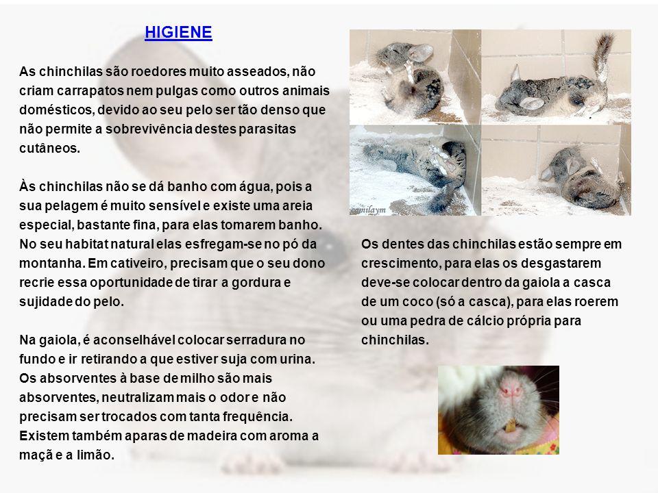 HIGIENE As chinchilas são roedores muito asseados, não criam carrapatos nem pulgas como outros animais domésticos, devido ao seu pelo ser tão denso que não permite a sobrevivência destes parasitas cutâneos.