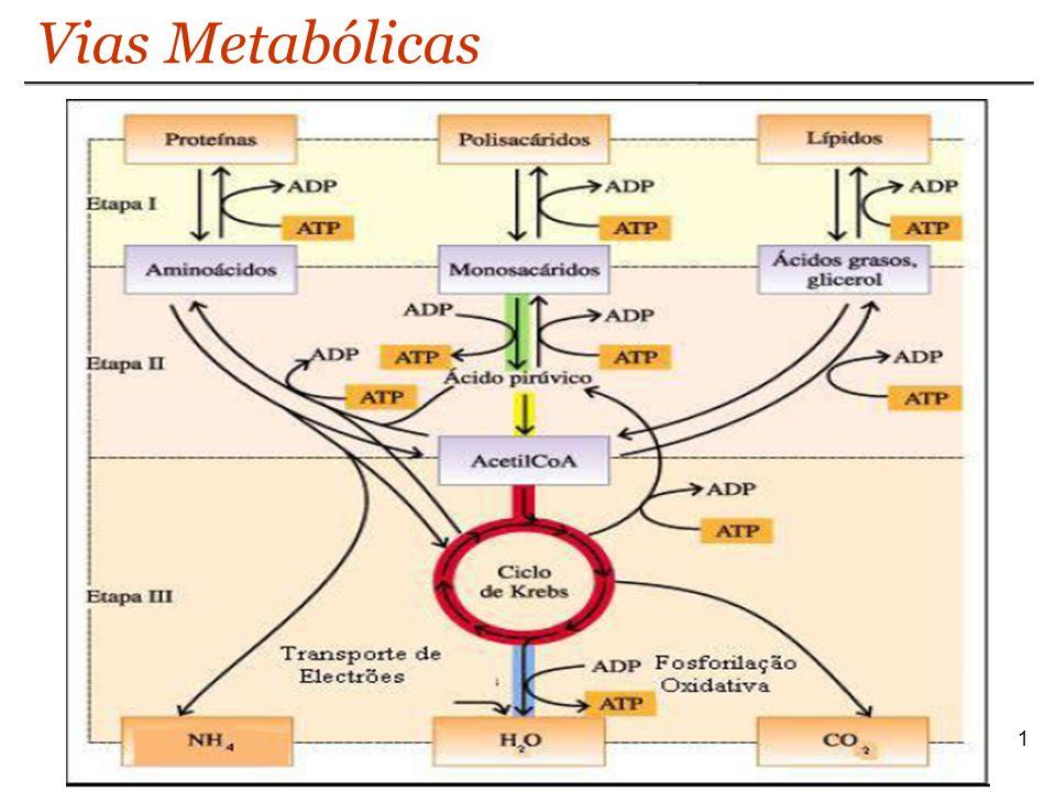 Vias Metabólicas 1