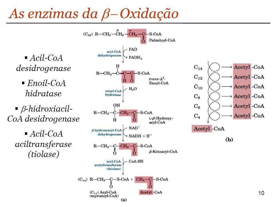 As enzimas da Oxidação 10 Acil-CoA desidrogenase Enoil-CoA hidratase -hidroxiacil- CoA desidrogenase Acil-CoA aciltransferase (tiolase)