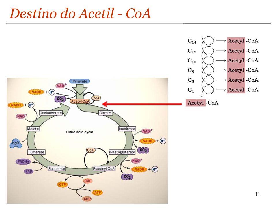 11 Destino do Acetil - CoA