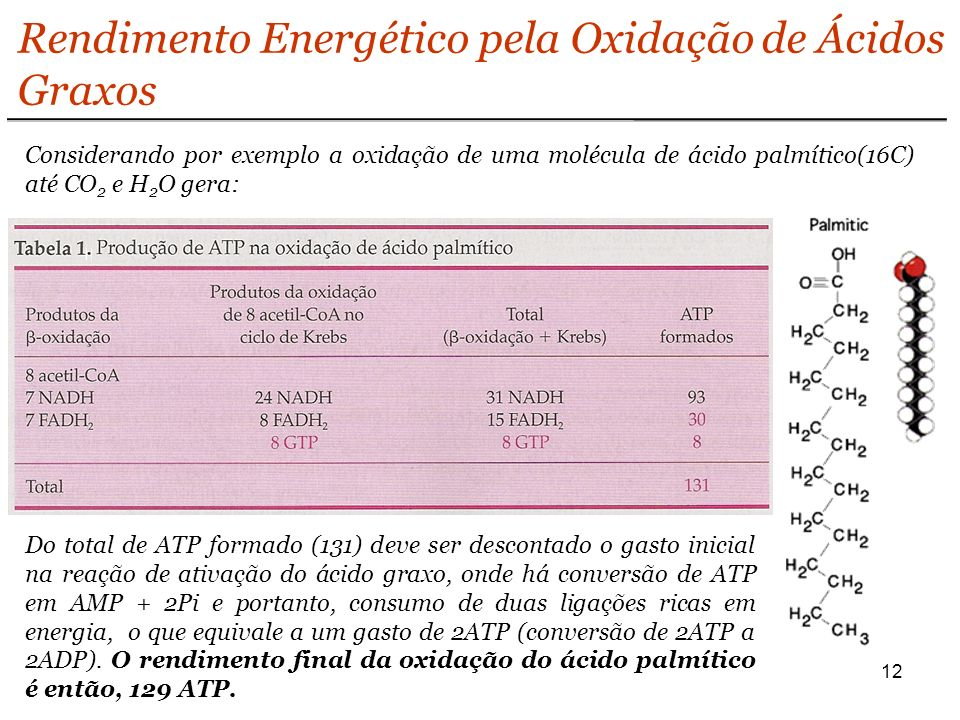 12 Rendimento Energético pela Oxidação de Ácidos Graxos Considerando por exemplo a oxidação de uma molécula de ácido palmítico(16C) até CO 2 e H 2 O gera: Do total de ATP formado (131) deve ser descontado o gasto inicial na reação de ativação do ácido graxo, onde há conversão de ATP em AMP + 2Pi e portanto, consumo de duas ligações ricas em energia, o que equivale a um gasto de 2ATP (conversão de 2ATP a 2ADP).