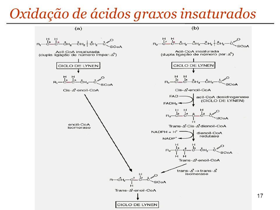 17 Oxidação de ácidos graxos insaturados