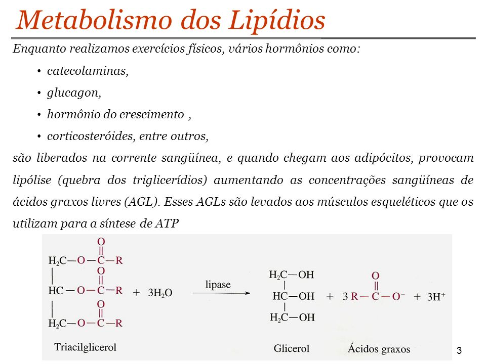 3 Metabolismo dos Lipídios Enquanto realizamos exercícios físicos, vários hormônios como: catecolaminas, glucagon, hormônio do crescimento, corticosteróides, entre outros, são liberados na corrente sangüínea, e quando chegam aos adipócitos, provocam lipólise (quebra dos triglicerídios) aumentando as concentrações sangüíneas de ácidos graxos livres (AGL).