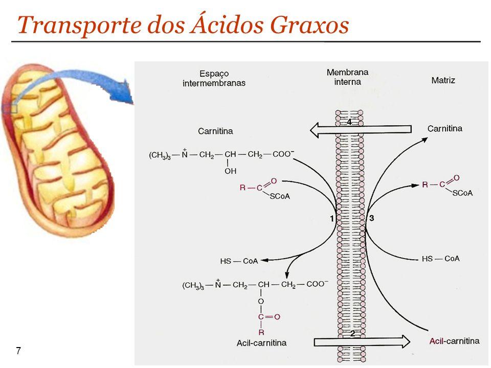 7 Transporte dos Ácidos Graxos