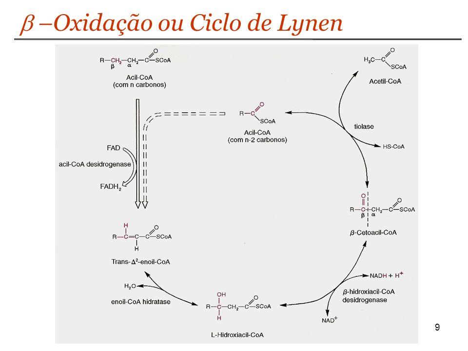 9 –Oxidação ou Ciclo de Lynen