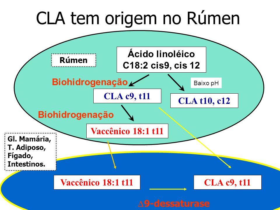 CLA tem origem no Rúmen Ácido linoléico C18:2 cis9, cis 12 CLA c9, t11 Biohidrogenação Vaccênico 18:1 t11 Biohidrogenação Vaccênico 18:1 t11 9-dessatu