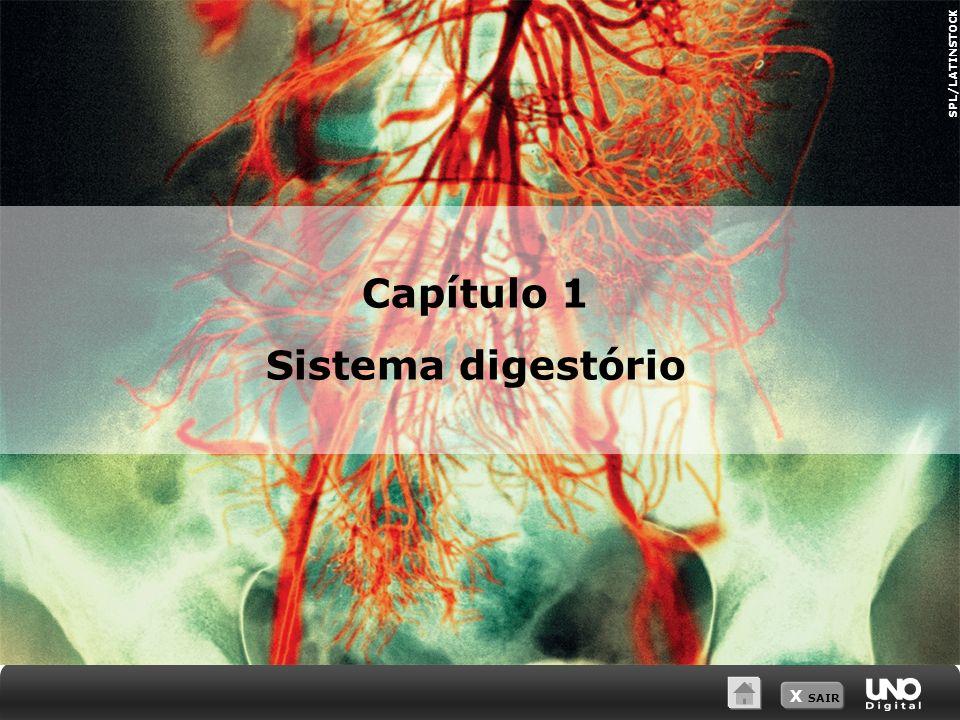 X SAIR Capítulo 1 Sistema digestório SPL/LATINSTOCK