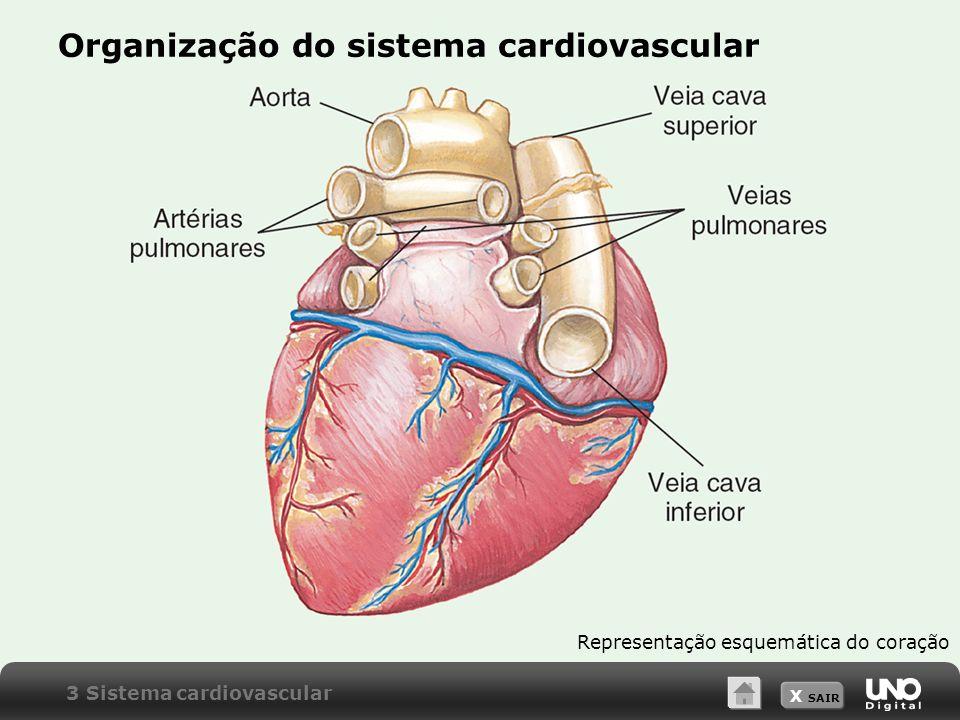 X SAIR Organização do sistema cardiovascular Representação esquemática do coração 3 Sistema cardiovascular
