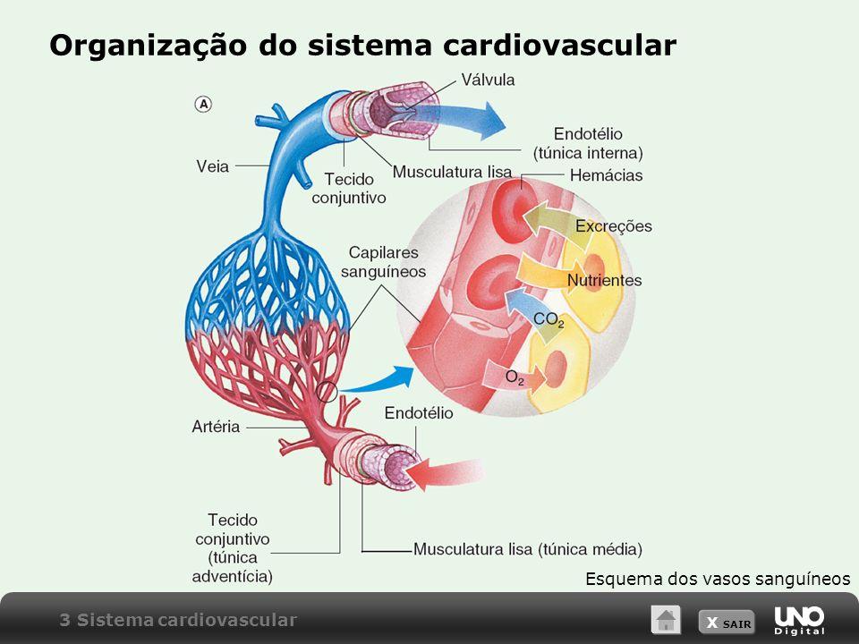 X SAIR Organização do sistema cardiovascular Esquema dos vasos sanguíneos 3 Sistema cardiovascular