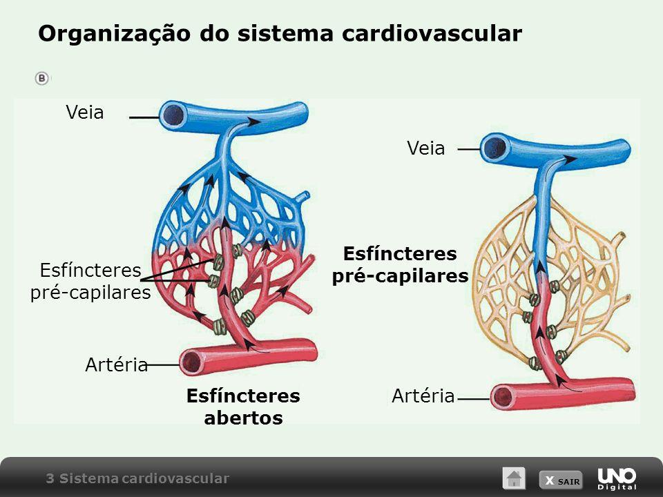 X SAIR Organização do sistema cardiovascular 3 Sistema cardiovascular Veia Esfíncteres pré-capilares Esfíncteres abertos Artéria