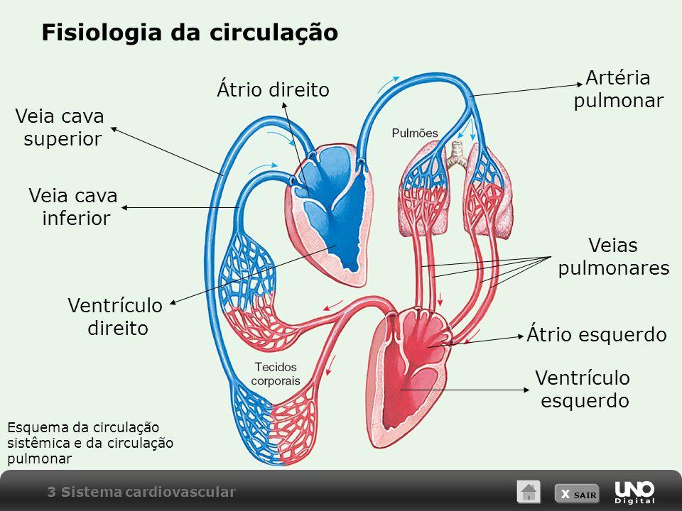 X SAIR Fisiologia da circulação Veia cava superior Veia cava inferior Artéria pulmonar Veias pulmonares Átrio direito Ventrículo direito Átrio esquerdo Ventrículo esquerdo Esquema da circulação sistêmica e da circulação pulmonar 3 Sistema cardiovascular
