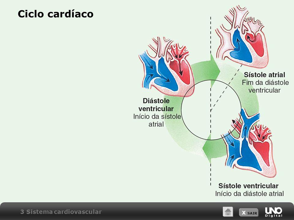 X SAIR Ciclo cardíaco 3 Sistema cardiovascular