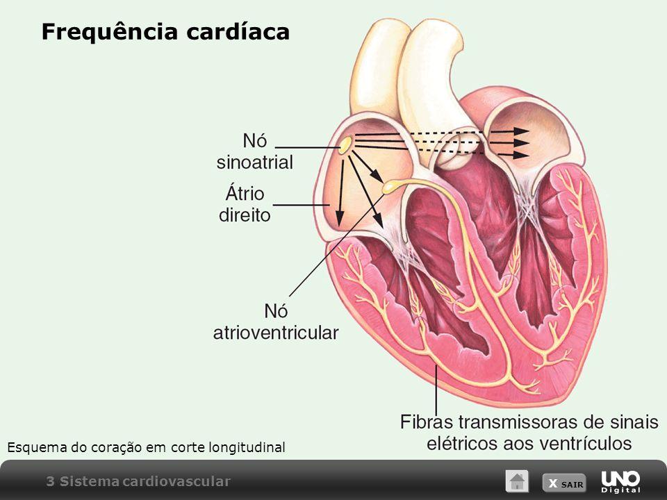 X SAIR Frequência cardíaca Esquema do coração em corte longitudinal 3 Sistema cardiovascular