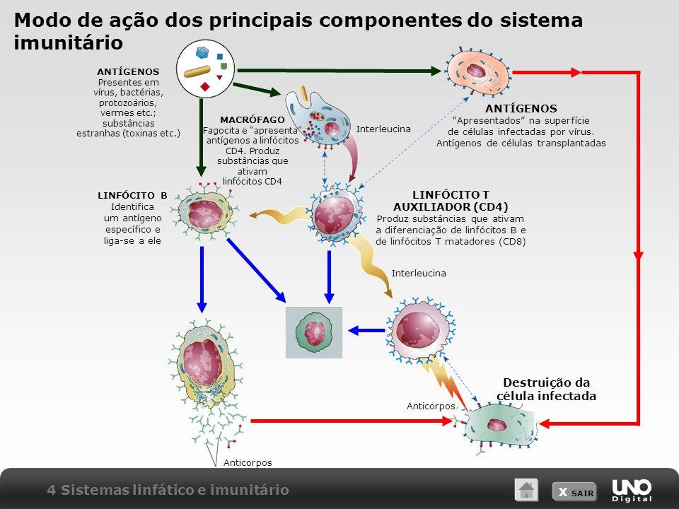 X SAIR Modo de ação dos principais componentes do sistema imunitário 4 Sistemas linfático e imunitário ANTÍGENOS Presentes em vírus, bactérias, protozoários, vermes etc.; substâncias estranhas (toxinas etc.) ANTÍGENOS Apresentados na superfície de células infectadas por vírus.