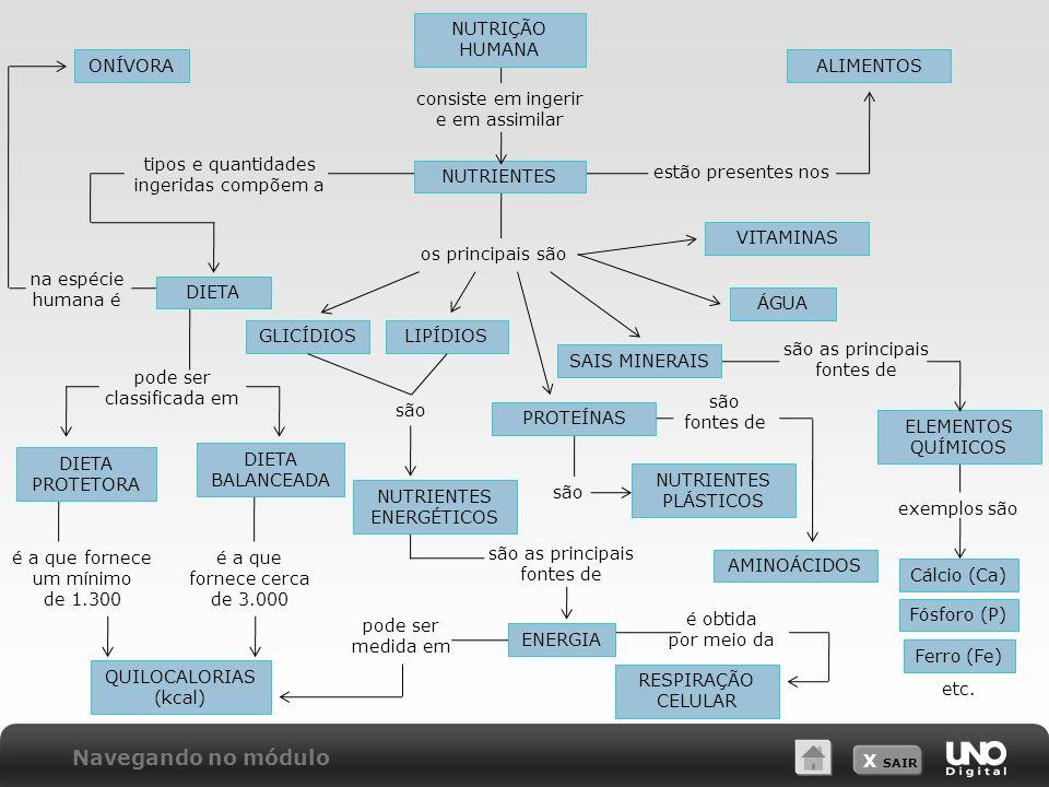 X SAIR NUTRIÇÃO HUMANA consiste em ingerir e em assimilar NUTRIENTES estão presentes nos ALIMENTOS tipos e quantidades ingeridas compõem a DIETA na espécie humana é ONÍVORA pode ser classificada em DIETA PROTETORA DIETA BALANCEADA os principais são VITAMINAS ÁGUA SAIS MINERAIS são as principais fontes de ELEMENTOS QUÍMICOS exemplos são Cálcio (Ca) Fósforo (P) Ferro (Fe) etc.