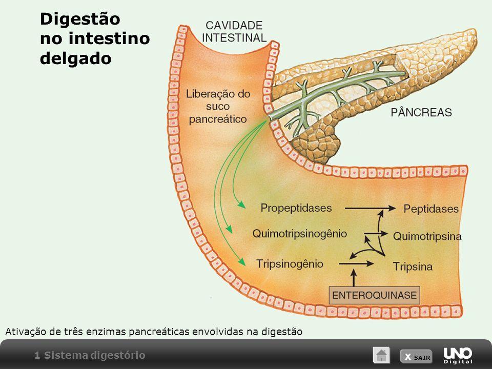 X SAIR Ativação de três enzimas pancreáticas envolvidas na digestão Digestão no intestino delgado 1 Sistema digestório