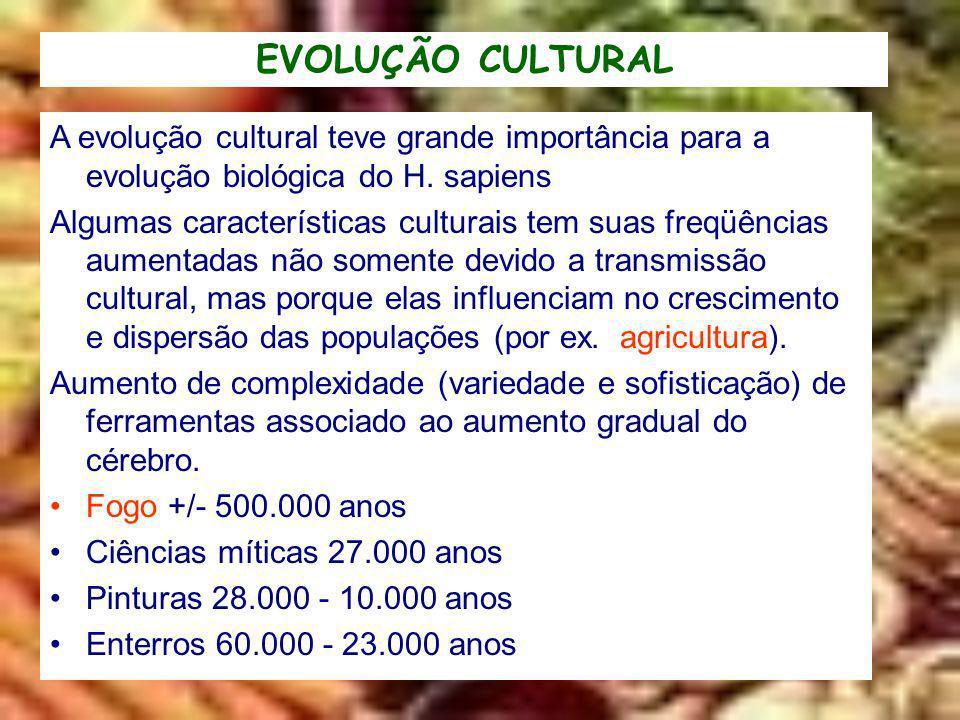 EVOLUÇÃO CULTURAL A evolução cultural teve grande importância para a evolução biológica do H. sapiens Algumas características culturais tem suas freqü