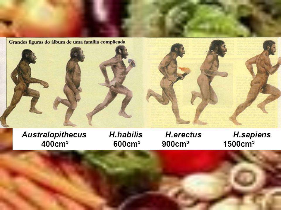 Australopithecus H.habilis H.erectus H.sapiens 400cm³ 600cm³ 900cm³ 1500cm³