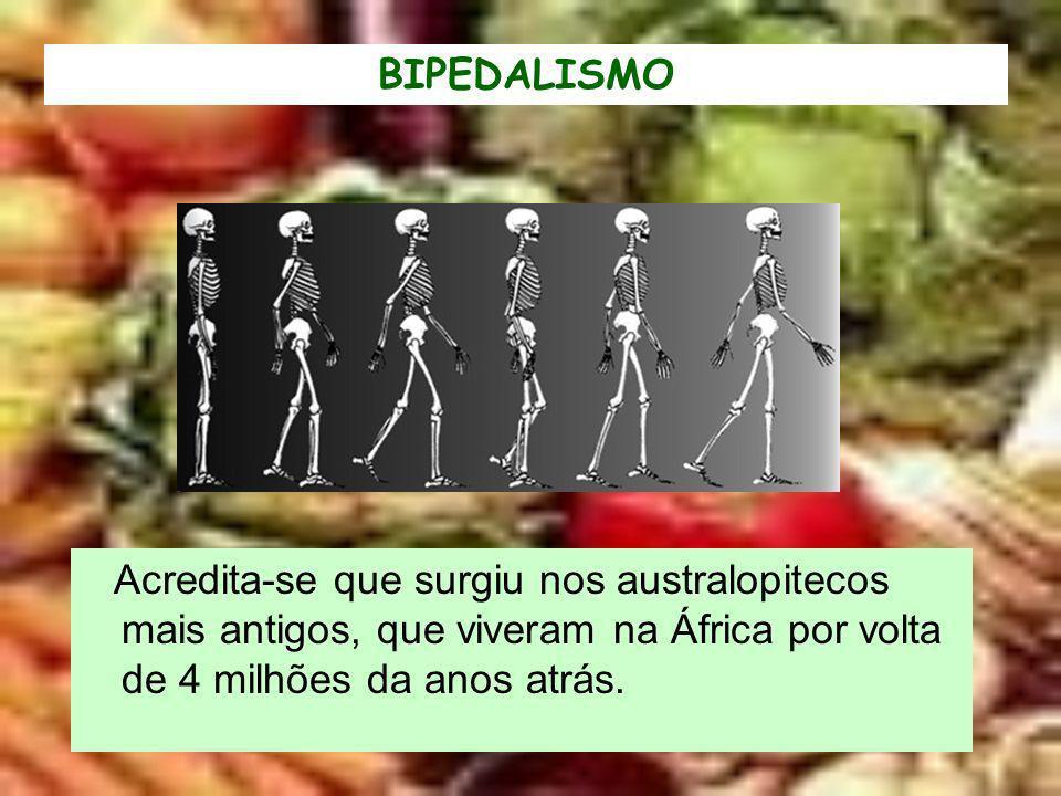 BIPEDALISMO Acredita-se que surgiu nos australopitecos mais antigos, que viveram na África por volta de 4 milhões da anos atrás.