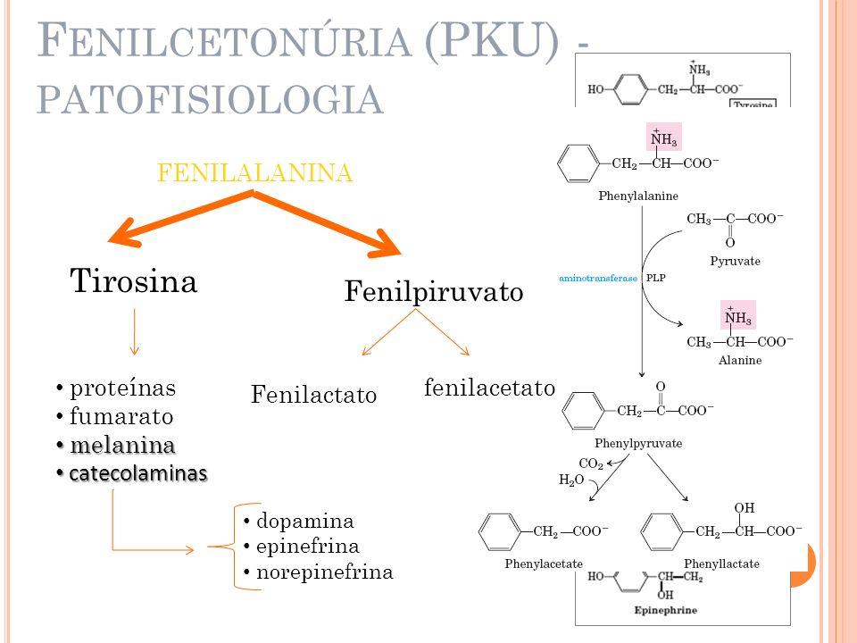 F ENILCETONÚRIA (PKU) - PATOFISIOLOGIA FENILALANINA Tirosina proteínas fumarato melanina melanina catecolaminas catecolaminas Fenilpiruvato Fenilactat