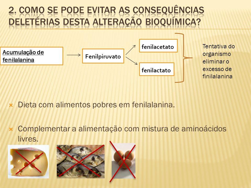 Dieta com alimentos pobres em fenilalanina. Complementar a alimentação com mistura de aminoácidos livres. Acumulação de fenilalanina Fenilpiruvato fen