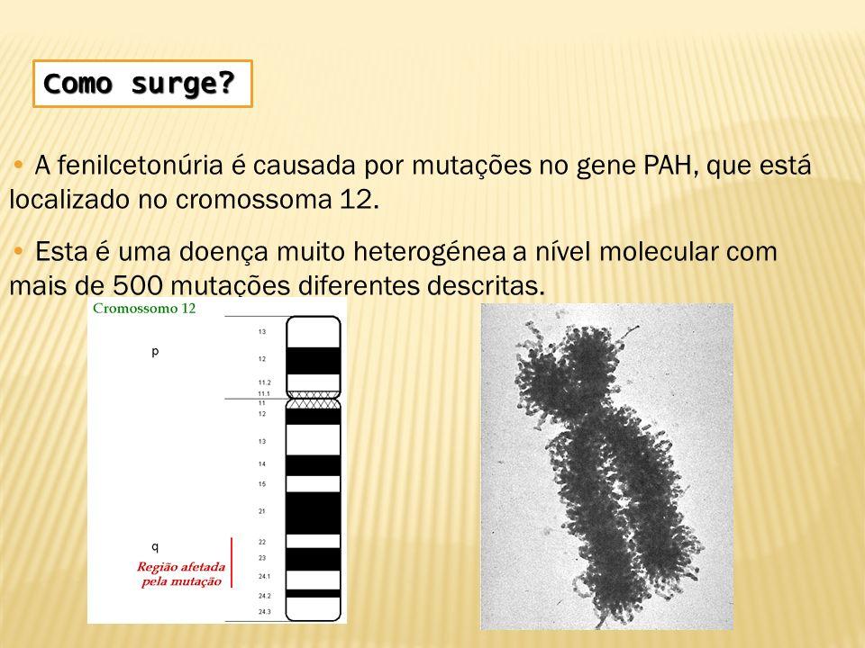 Como surge? A fenilcetonúria é causada por mutações no gene PAH, que está localizado no cromossoma 12. Esta é uma doença muito heterogénea a nível mol