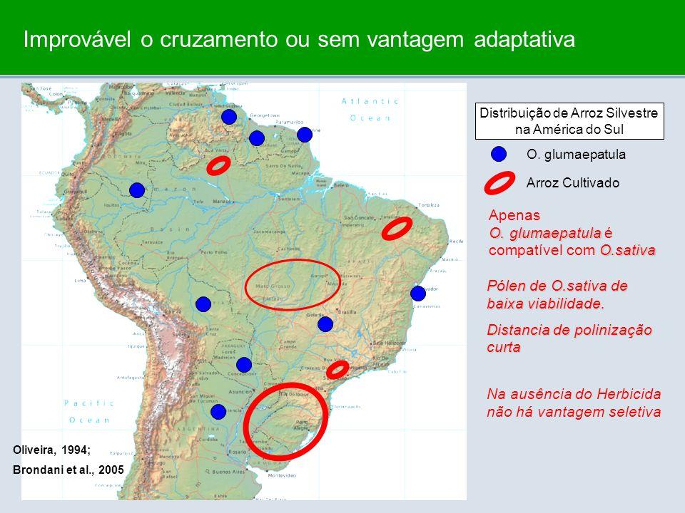 Distribuição de Arroz Silvestre na América do Sul O. glumaepatula Arroz Cultivado O. glumaepatula O.sativa Apenas O. glumaepatula é compatível com O.s