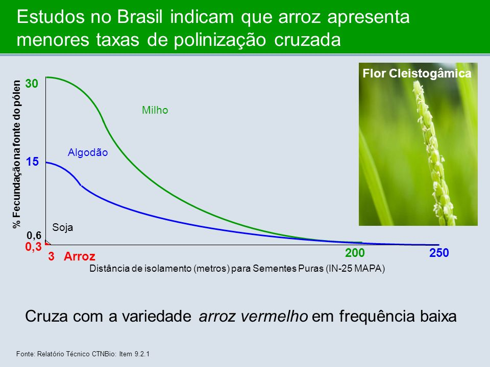 Estudos no Brasil indicam que arroz apresenta menores taxas de polinização cruzada Distância de isolamento (metros) para Sementes Puras (IN-25 MAPA) F