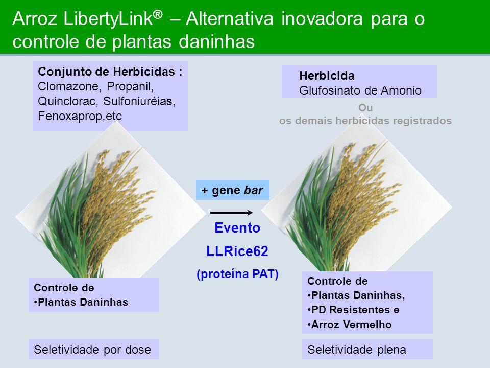 Arroz LibertyLink ® – Alternativa inovadora para o controle de plantas daninhas + gene bar Evento LLRice62 (proteína PAT) Conjunto de Herbicidas : Clo