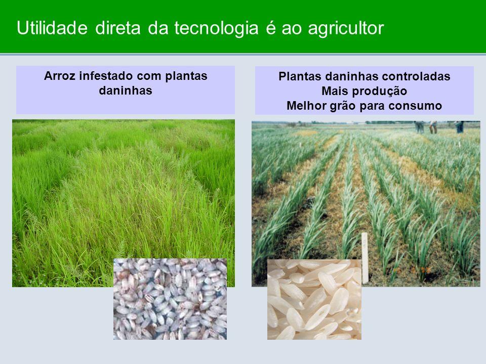 Utilidade direta da tecnologia é ao agricultor Arroz infestado com plantas daninhas Plantas daninhas controladas Mais produção Melhor grão para consum